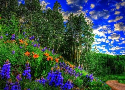 стихи о птицах, цветах, деревьях, временах года