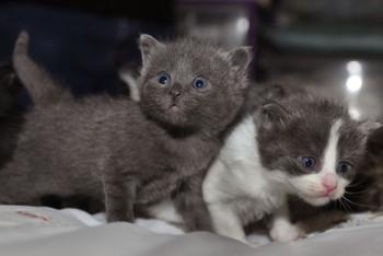 Детские стихи про котят , детей, маму, бабушку