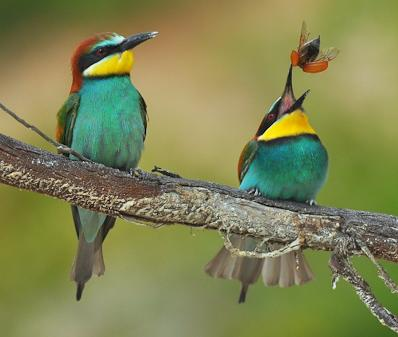 Стихи о птицах и весне