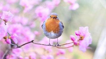 стих о весенней птичке