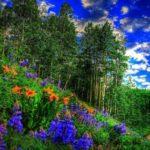 стихи о птицах, цветах, деревьях, временах года и жизни