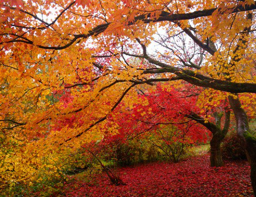 Стихи про золотую осень, дождик, лето и весну