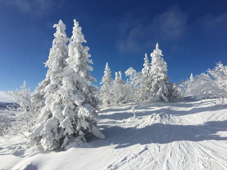 Зима, снег, мороз, метель и вьюги